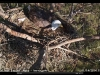 2014-0114-berry-eagle-cam-capture-14