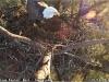 2014-0114-berry-eagle-cam-capture-3-x