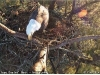 2014-0114-berry-eagle-cam-capture-4-x