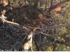 2014-0114-berry-eagle-cam-capture-5-x
