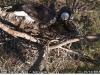 2014-0114-berry-eagle-cam-capture-7-x