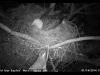 2014-0114-bw-eagle