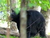 2014-0830-bear-closeup