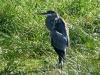 2012-1005-heron-lake-tamarack-pm.jpg