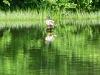 2013 0602 duck lake tamarack spillway.jpg