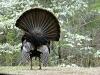 2014 0414 turkey back.jpg