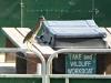 2015-0709-tiny-heron-on-boat.jpg
