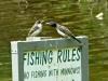 2015-0723-swallows-feeding-2.jpg