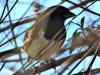 P1000983-red-eye-bird.jpg