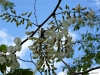 2012-0407-black-locust-bee-2-pm