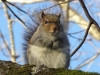 2013-1218-squirrel3