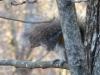 2013-1218-squirrel4