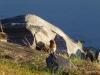 p1110346-2013-1027-bluebird-at-dam
