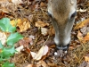 2014-1029-deer-mushrooms-1