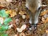2014-1029-deer-mushrooms-1