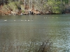 2012-1219-ducks-geese-1-pm