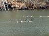 2012-1219-ducks-geese-2-pm