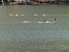 2012-1219-ducks-geese-3-pm