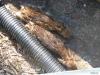 2012-0626-newborn-twin-fawns