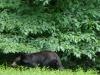 2012-0626-bear