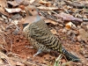 2014-0110-325-flicker-muddy-beak-a