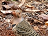 2014-0110-350-flicker-muddy-beak-front