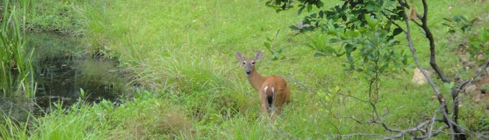 2010-0718-deer-header