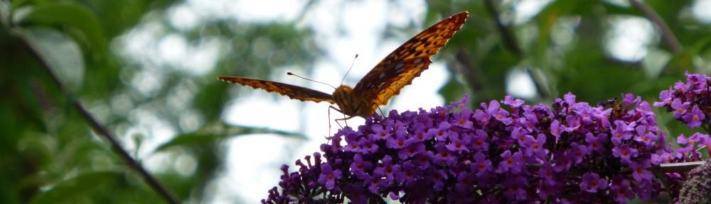 2012-0522-butterfly-header-2
