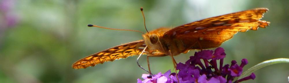 2012-0522-butterfly-header