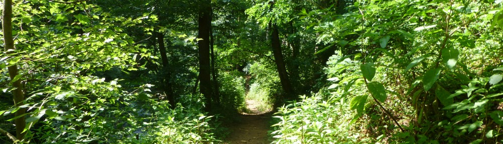 2012-0603-trail-understory-header