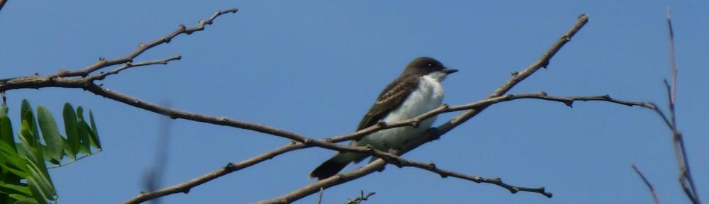 2012-0614-bird-spillway-header