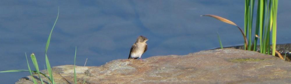 2012-0616-bird-dam-header