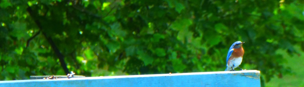 2012-0617-bluebird-header