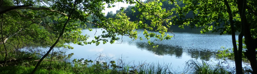 2012-0619-lake-tamarack-header