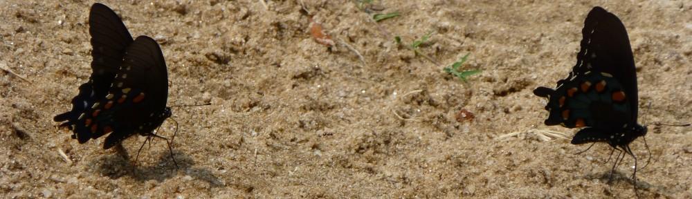 2012-0702-butterflies-bunker-heaader