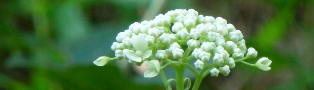 2012-0707-wildflower-header