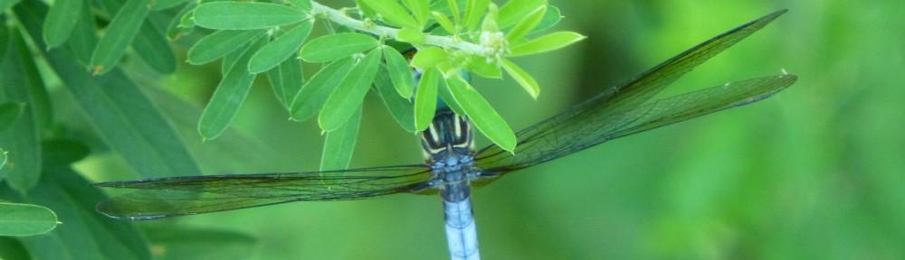 2012-0708-dragonfly-header