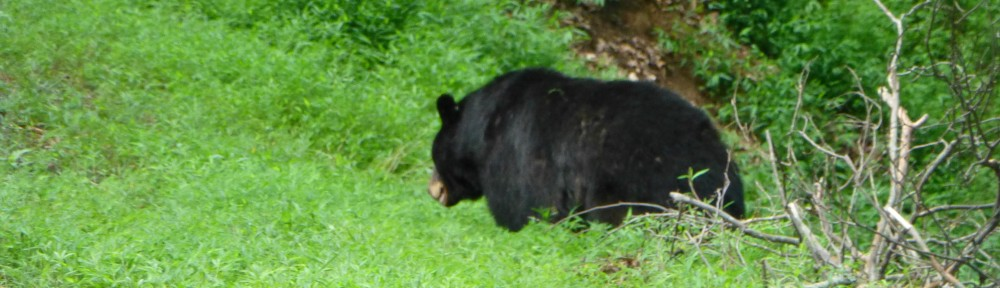2012-0715-big-bear-header