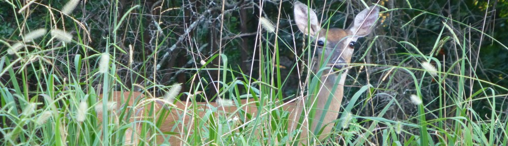 2012-0723-deer-header
