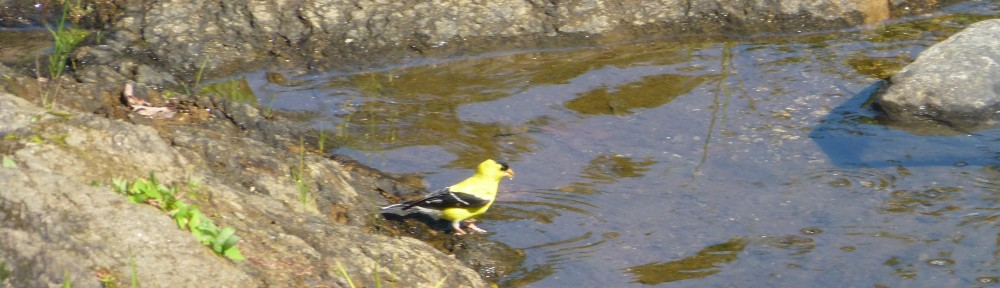 2012-0812-goldfinch-header