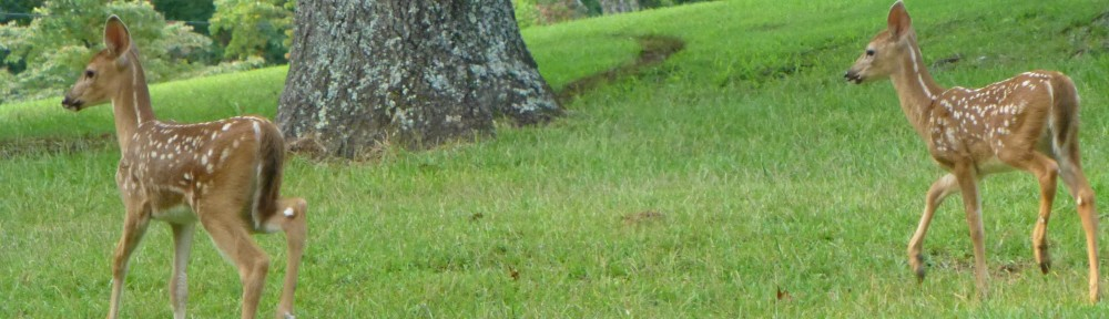 2012-0817-fawns-header