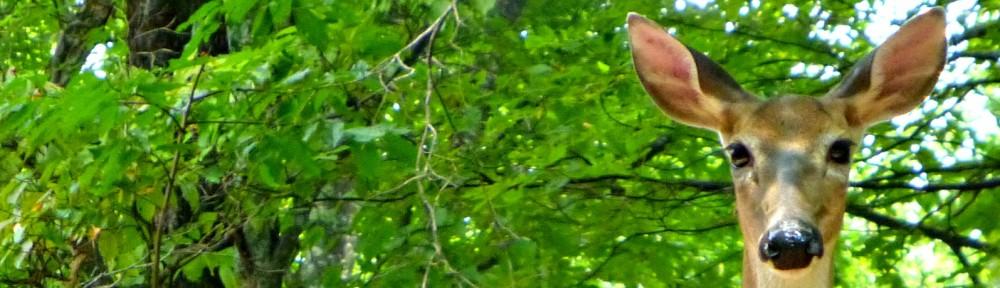 2012-0824-deer-header