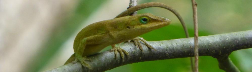 2012-0914-lizard-header