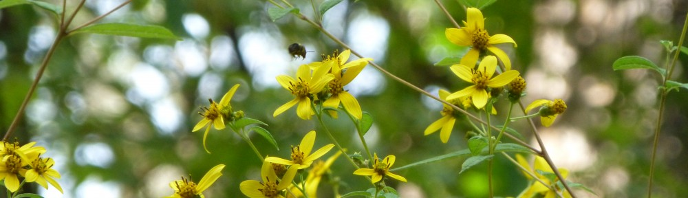 2012-0914-wildflowers-bee-header