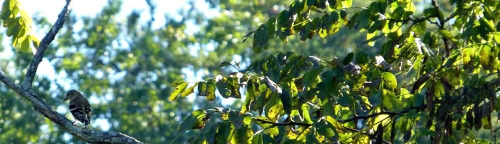 2012-0923-bird-header