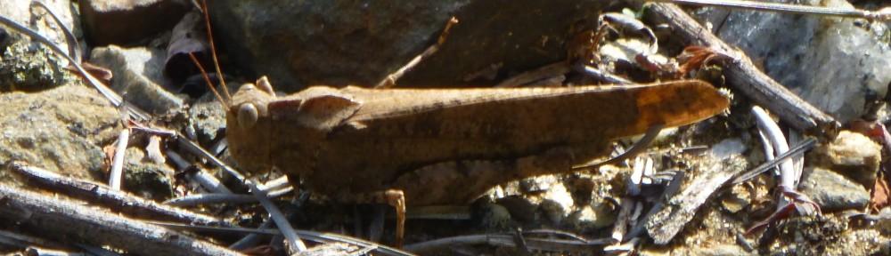 2012-1009-grasshopper-quarry