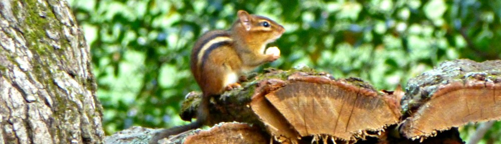 2012-1020-chipmunk-header