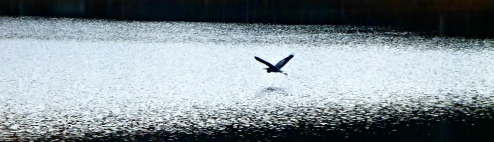 2012-1125-heron-header