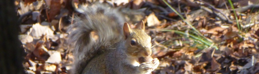 2012-1213-squirrel-header