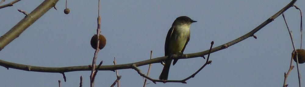 2012-1219-bird-header